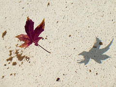 soil(0.0), invertebrate(0.0), starfish(0.0), leaf(1.0), sand(1.0), maple leaf(1.0), petal(1.0),