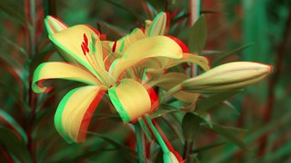lily depth change - 3d anaglyph - movie clip - anaglyph