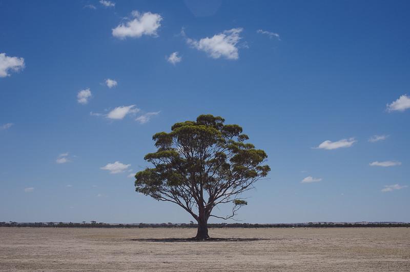 Bendering Road, Western Australia