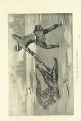 """British Library digitised image from page 67 of """"Melinda the Caboceer; or, Sport in Ashanti. A tale of the Gold Coast. ... With ... illustrations"""""""