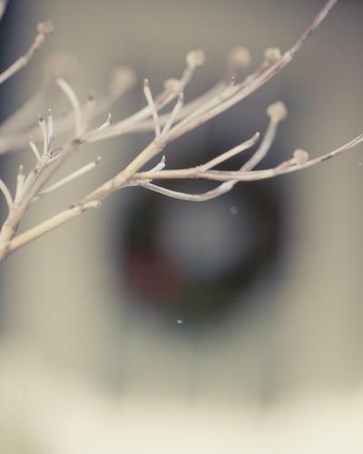 12-13 snow-9857-2