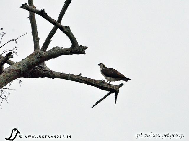 PIC: Cajun Country Swamp Tour - Birding