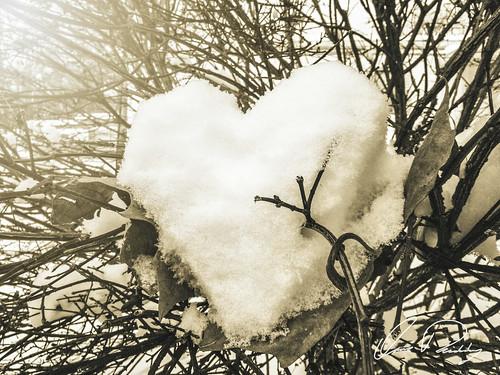 Pierced Snow Heart