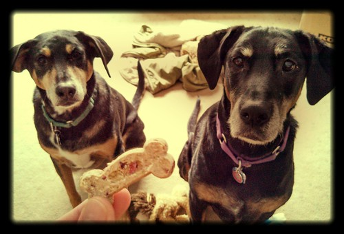 Tut & Lola love Casey Jones Bones