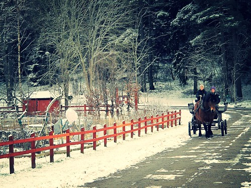 Horse and buggy exercising in the snow, Stockholm, Sweden by sawelli