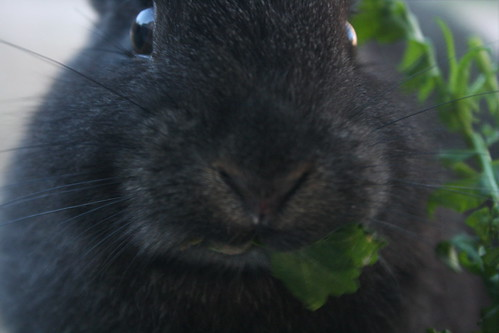 The Memory of a Bunny Called Schmidt