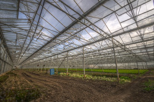 hdr_20140407_181925 Greenhouse
