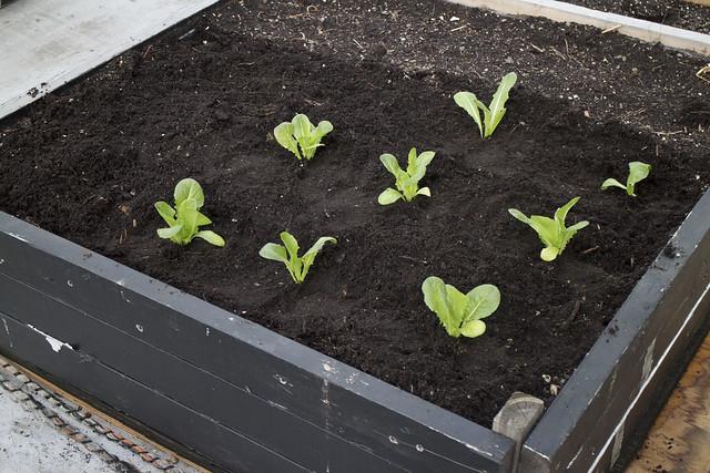 Seedling Planting Spring 2014_21