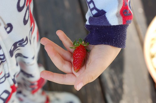 First strawberries of the season by Eve Fox, the Garden of Eating blog, copyright 2014