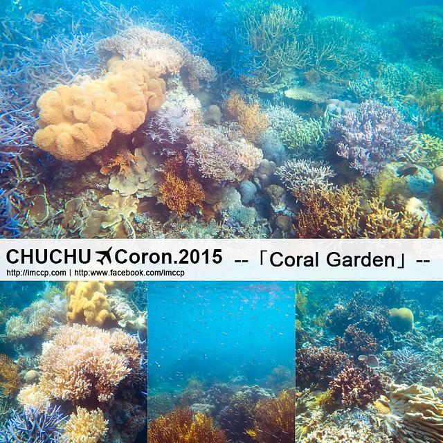 科隆 珊瑚花園