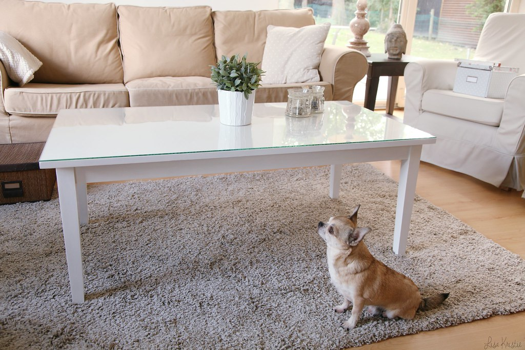 white interior living room area pale light bright colors pastel beige chihuahua male short haired smooth coat wolf wolfthedog ikea seats couch diy glass coffee table interior home decoration