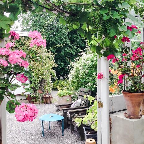äppelfabriken garden & cafe, ekerö, stockholm, july 2015