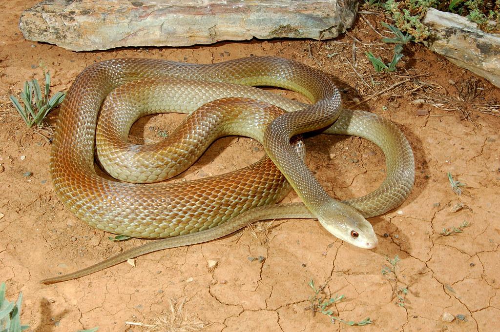 Видео змеи занимаются сексом