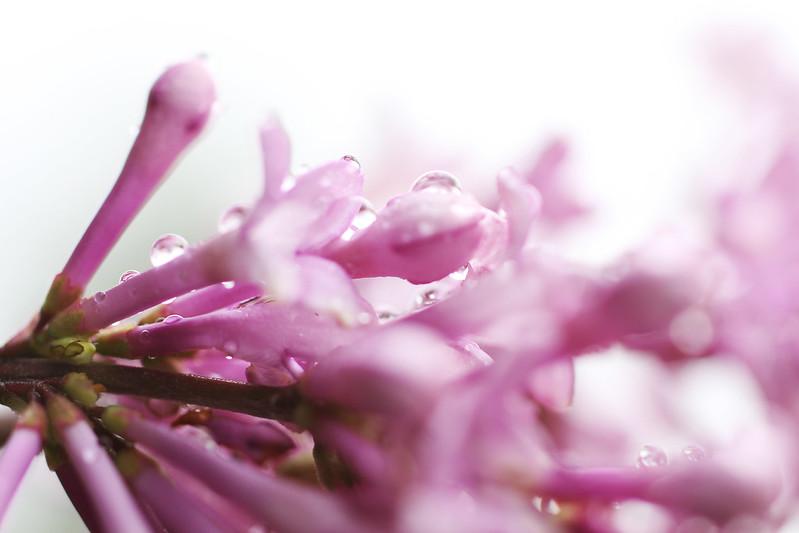 Whimsical petal pink