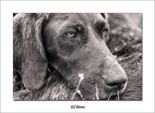 El Perro by Soler Paco