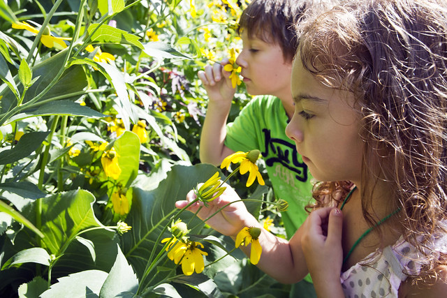 Children are invited to touch and smell plants in the Fragrance Garden. Photo by Caroline Voagen Nelson.