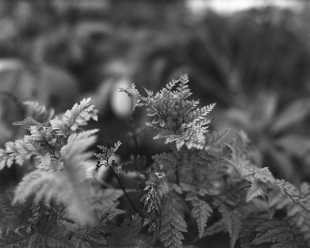 fern 2 - underexposed