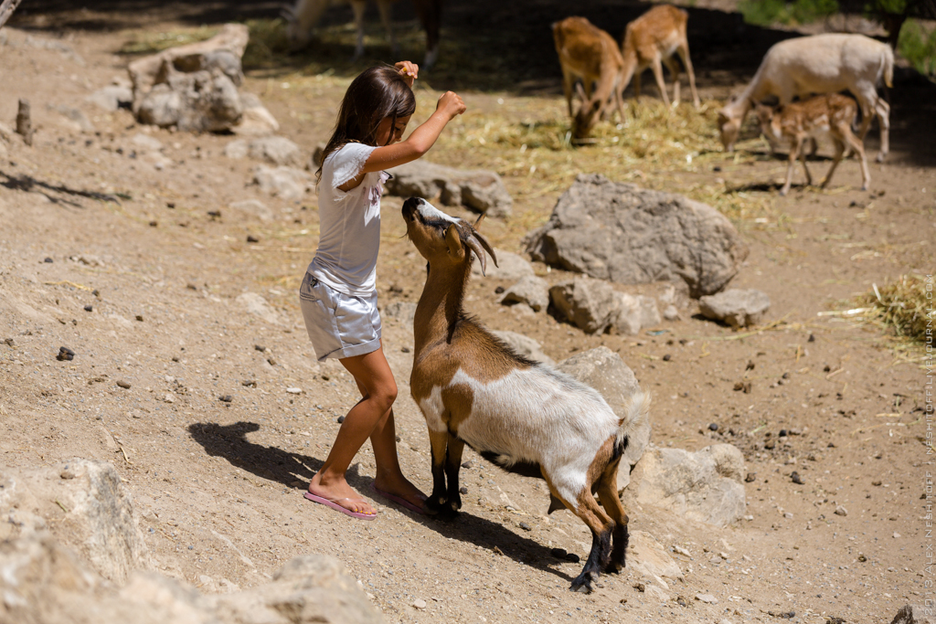 2013-Spain-Benidorm-SafariAitana-007