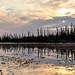 pond by T.Ferris 