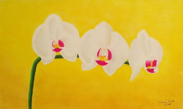 Orquídeas em fundo amarelo