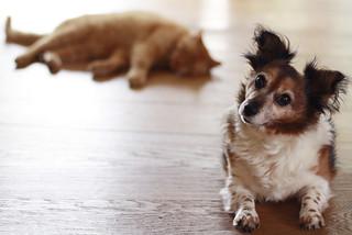 pets | Laura-v-t | Flickr