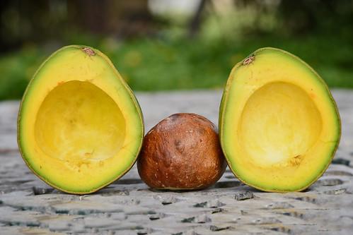 Avocado almost ripe