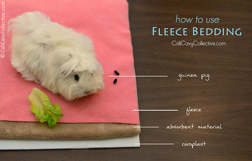 Abby-Roo shows how to layer fleece bedding in your guinea pig's cage