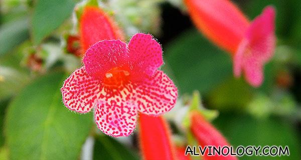 Pretty little red flower
