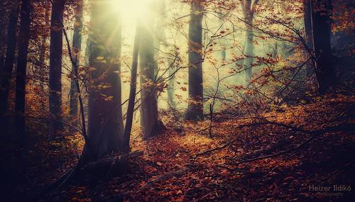 autumn trees light mist nature leaves fog forest woodland rays mygearandme