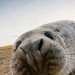 Grey Seal Pup (ultra wide-angle) by elliot.hook