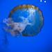 Shedd Aquarium 5