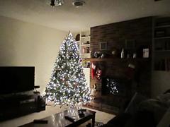 Big Tree Lit Up