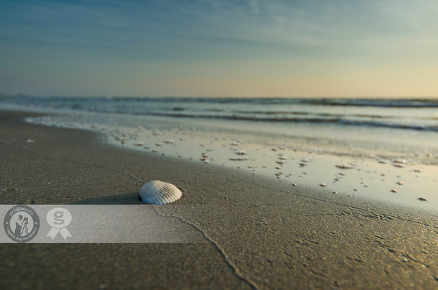Lonely Shell | Mamaia - Romania