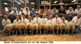 Ooilammeren  201 en 199 - 1996