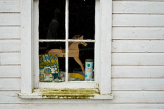 The Window {33/365} by disnemma