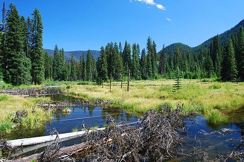 Beaver Pond, Manning Provincial Park, Cascade Mountains, Hope, British Columbia, Canada