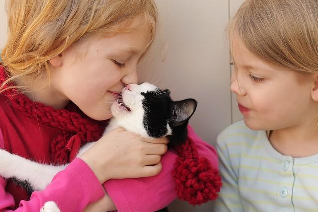 Simpkin Jackie o' Kitten love (
