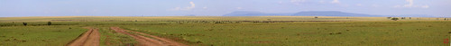 africa safari serengeti tropicaltrails wildebeestserengetinationalparktanzania