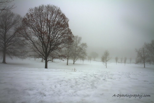 Branch Brook Park Fog 02-21-14