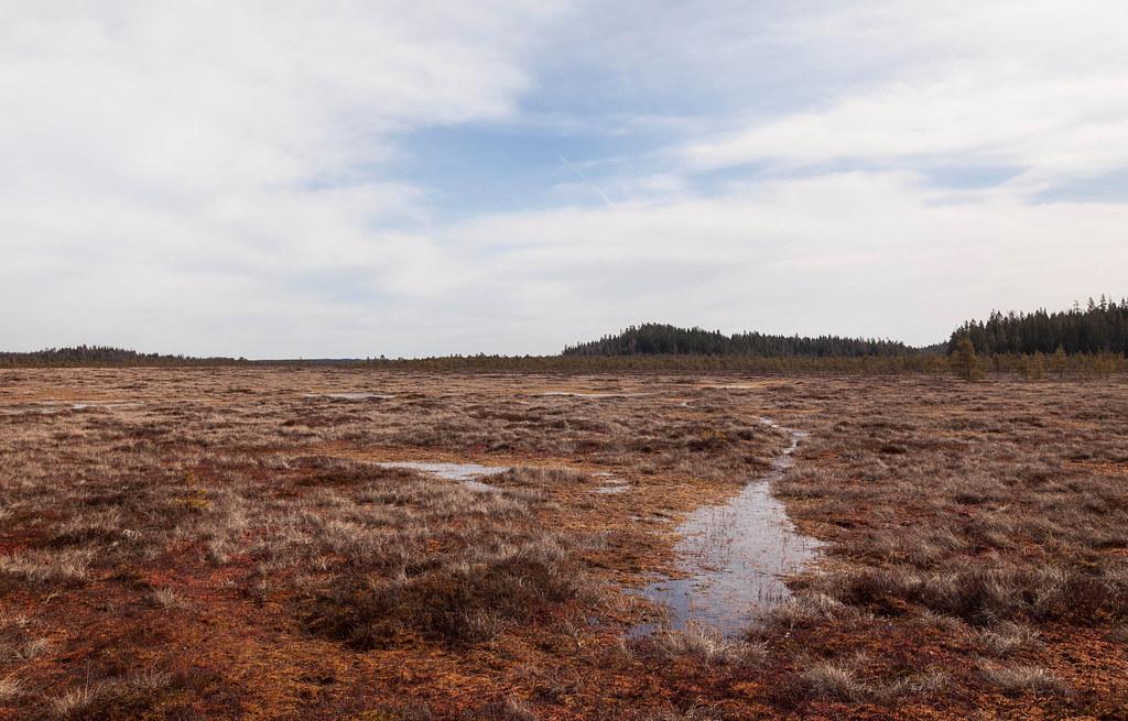 Torronsuo - Torronsuon kansallispuisto