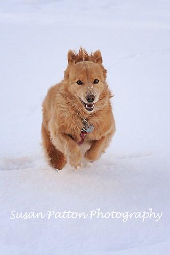wHenna_snow_2