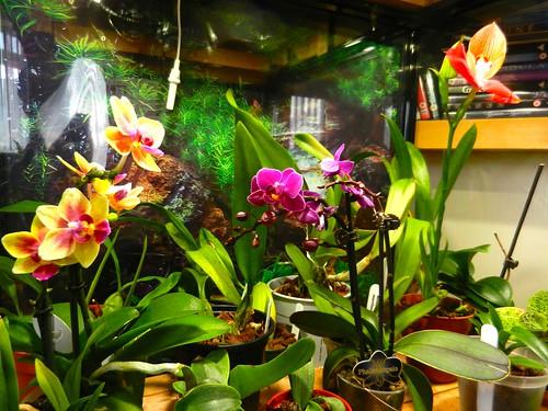 DSCN2717 Orchids