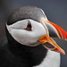 The Colorful Beak of a Puffin by Extreme Iceland