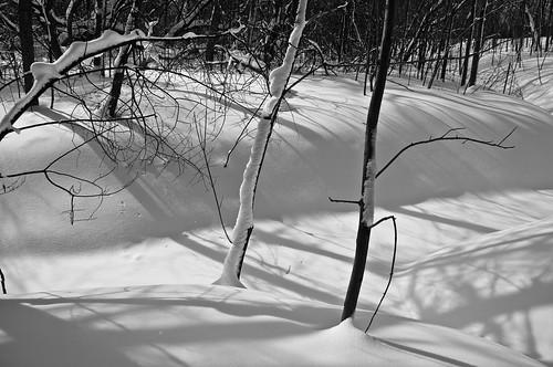 2017 2017©rpd'aoust ahuntsic aperture3 arbres d90 février hiver landscape montréal neige nikkor18300mm nikon nikond90 parcdeliledelavisitation paysage river rivière rivièredesprairies slowphotography snow trees winter