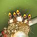 Swallows Choir by moaan