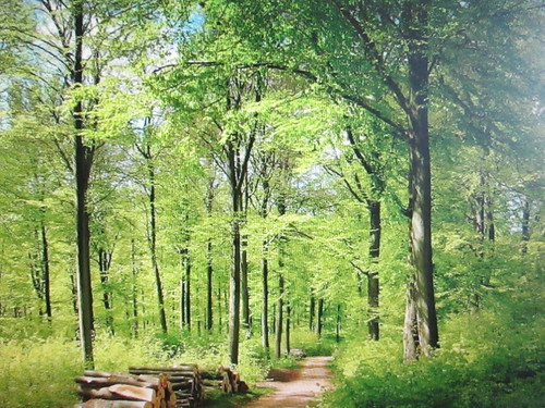 park wood trees summer green nature leaves canon season chanelchat