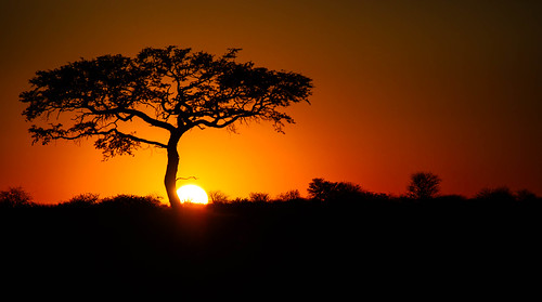 sunset tree colours dramatic botswana kalahari botswana2013