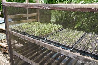 the-masters-garden-la-trinidad.jpg