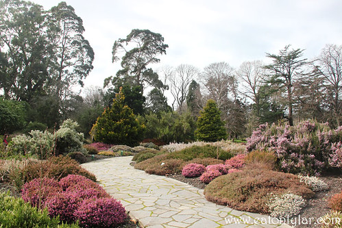 Heather Garden, Botanic Gardens, Christchurch