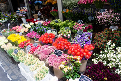 Marvelous sight at Floating Flower Market in Amsterdam - Things to do in Amsterdam